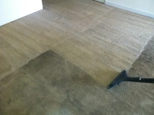 Landis Carpet Cleaning